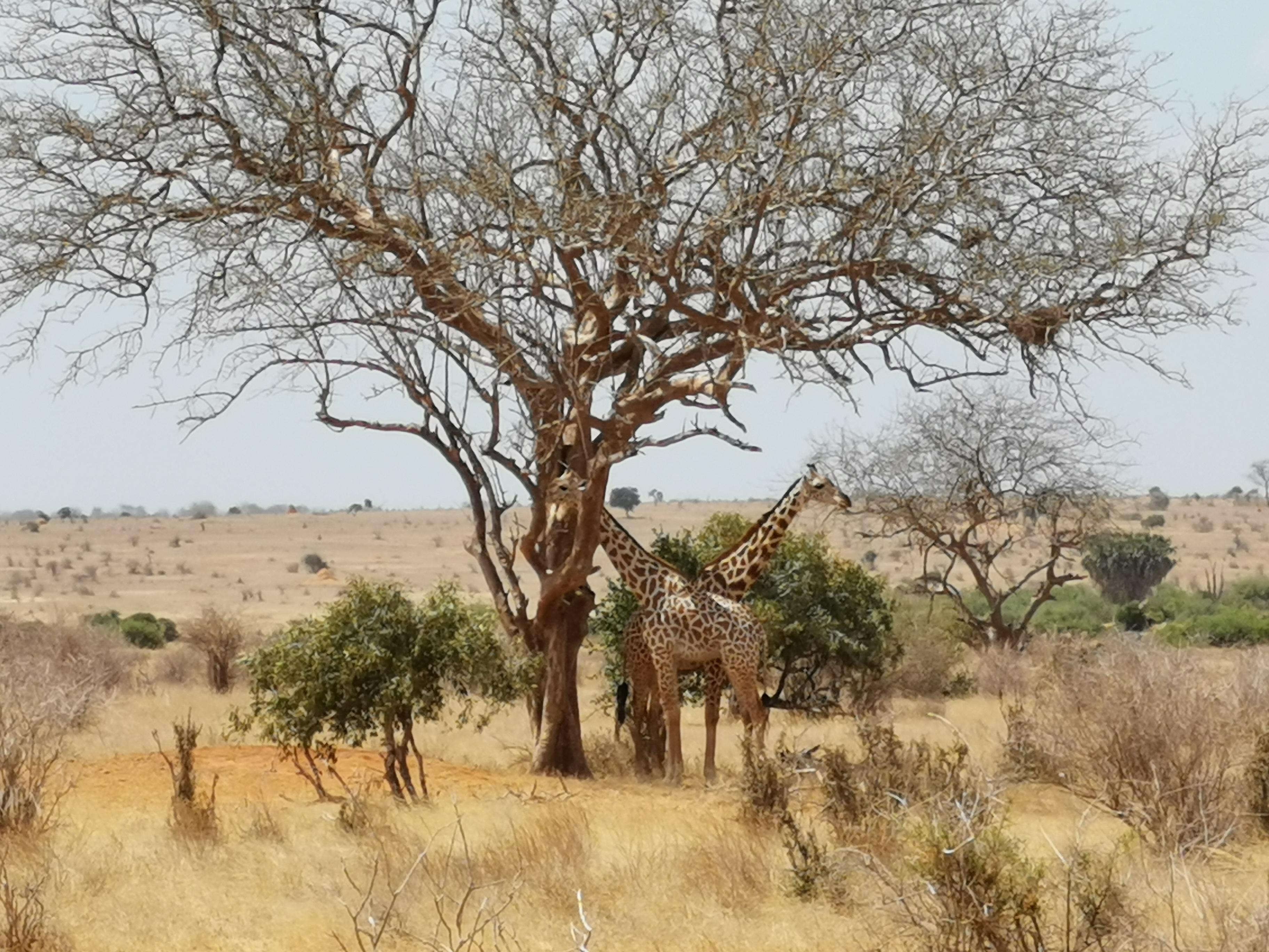 hüpnotisöör hüpnoos Keenia laager